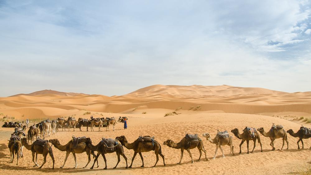 Merzouga, Morocco - Camels Rides