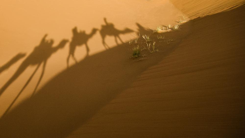 Merzouga, Morocco - Camel Shadows